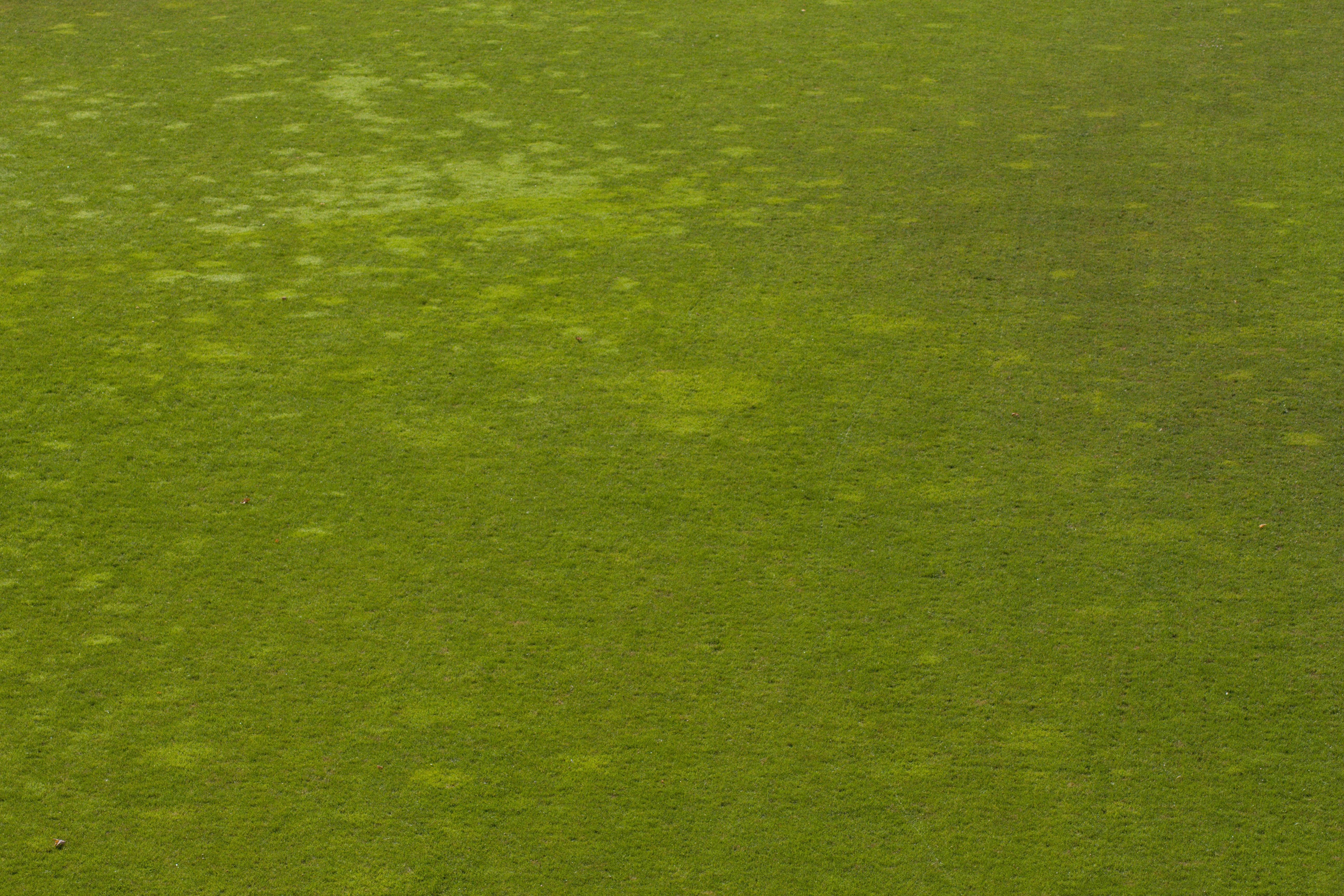 Obrázek trávníku